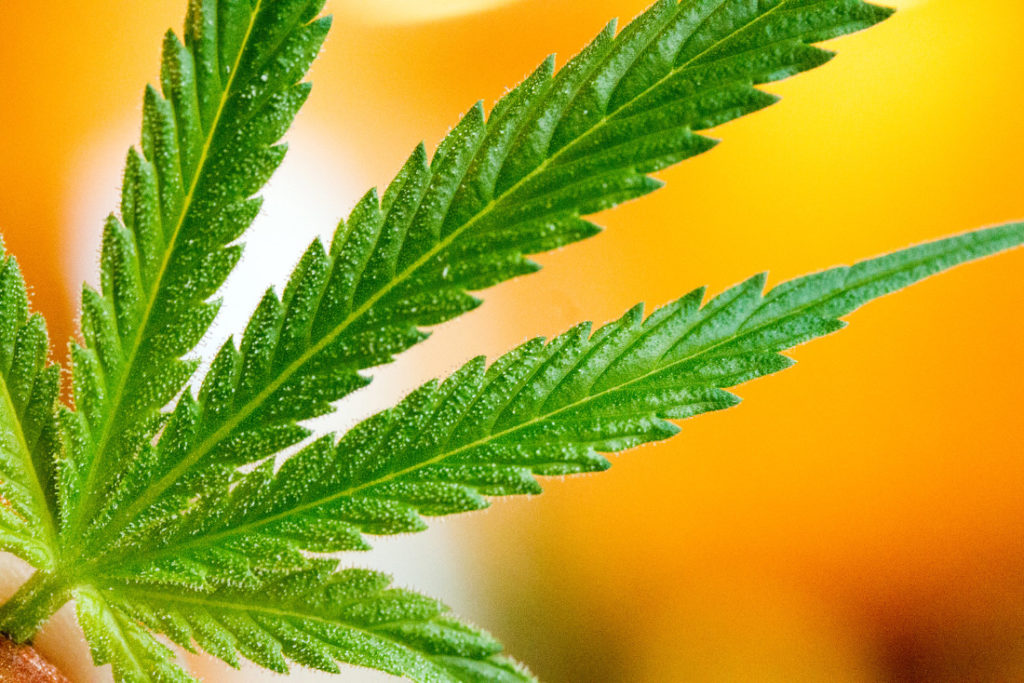 Legalized recreational marijuana a substitute for alcohol, but not tobacco